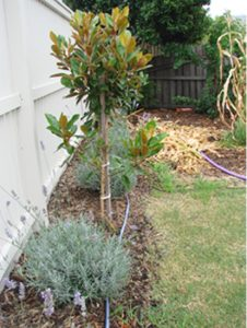 Garden After Watering
