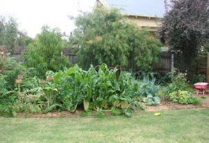 Garden After Watering with greywater
